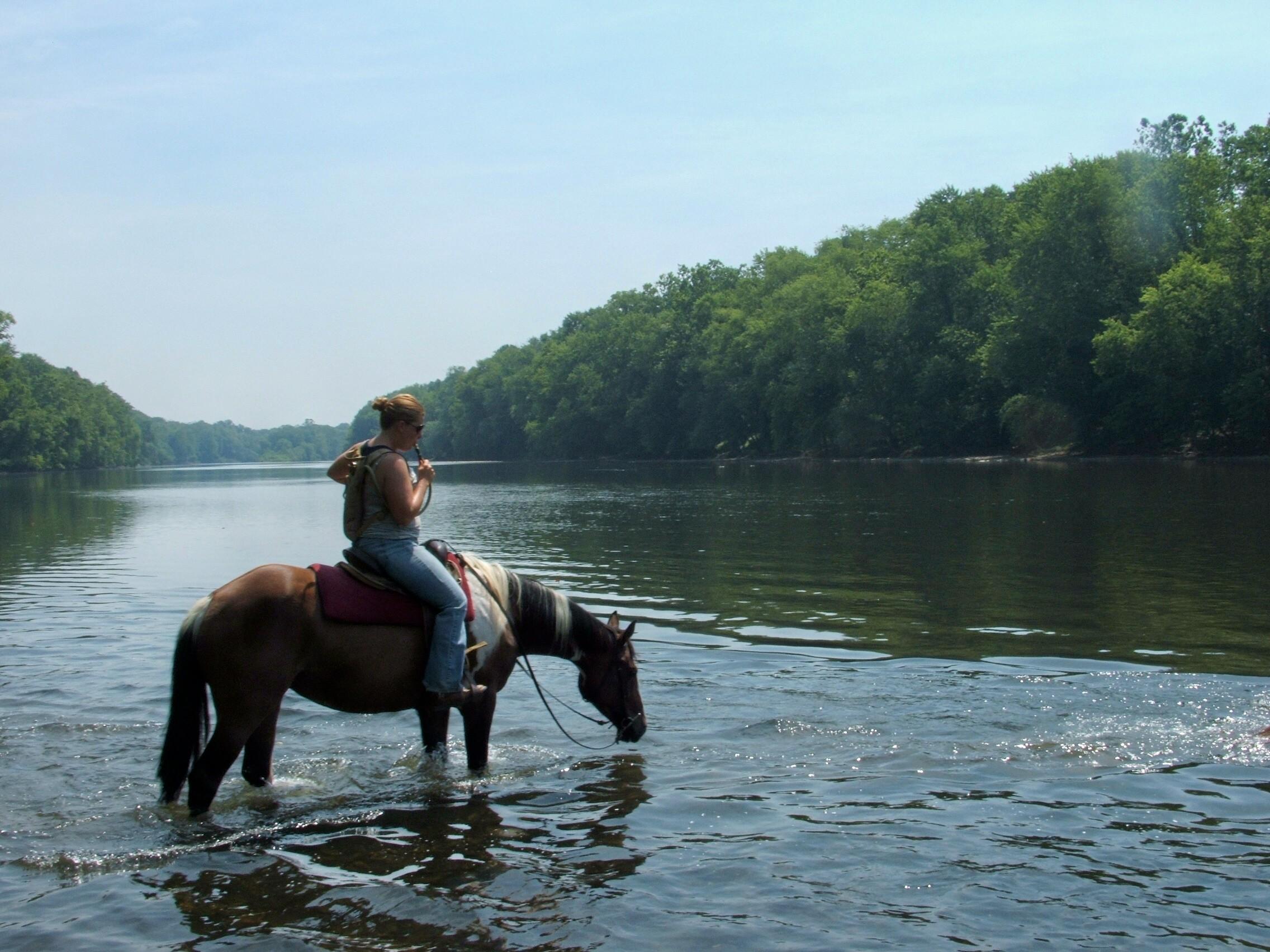 Sheeder Mill Farm Horses For Sale in Pennsylvania